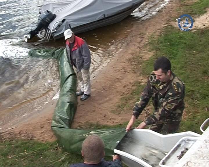 На Полотчине состоялось плановое зарыбление водоёмов