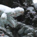 Природоохранные организации ежедневно патрулируют леса Полотчины