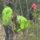 17 тысяч саженцев, более 3 гектаров: один день «Недели леса» на Полотчине