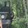 Два брата из Латвии наладили в Полоцком районе криминальный бизнес по экспорту необработанной древесины