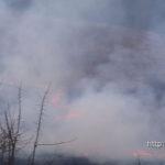 В Полоцком районе из-за выжигания сухой травы повреждён дом и уничтожены постройки