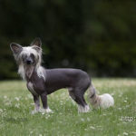 У полочанки похитили породистую собаку. Вора нашли
